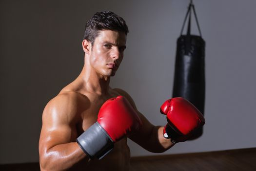 Serious muscular boxer in health club