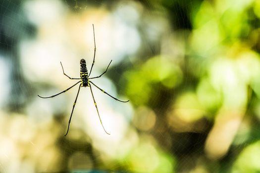 Spider with Defocus Background