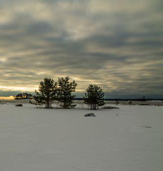 Trees on the snowy oceanshore