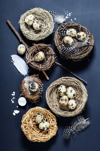 Easter background with eggs and nests