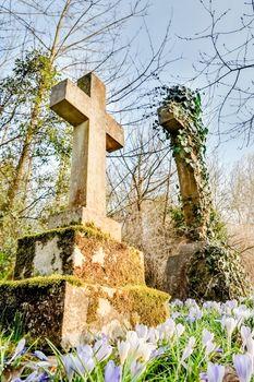 flowers in a graveyard