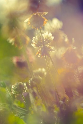 Soft macro picture of wildflowers vintage style