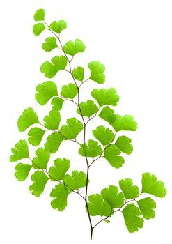 Fresh green plant