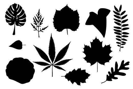 set of different leaves isolated