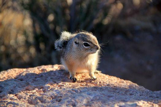 Very cute rodent