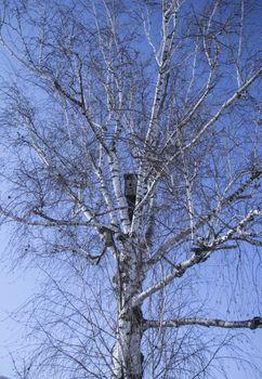 birdhouse on a birch tree in spring