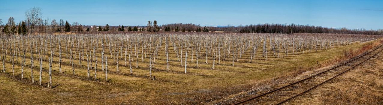 This is the look of a Winery in Canada, Quebec on the Spring Season