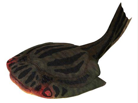 Drepanaspis Fish over White