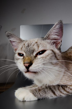 cat portrait wide angle