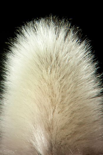 Close up of a Pussy Willow