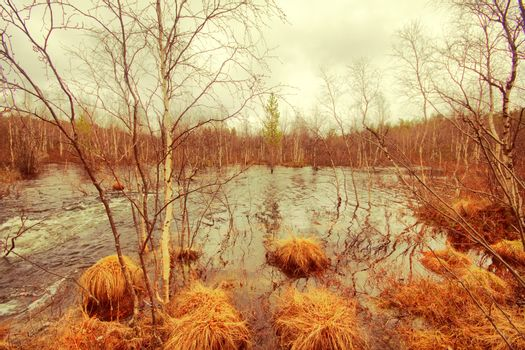 Picture of spring floods. Transparent water flow in  birch forest.