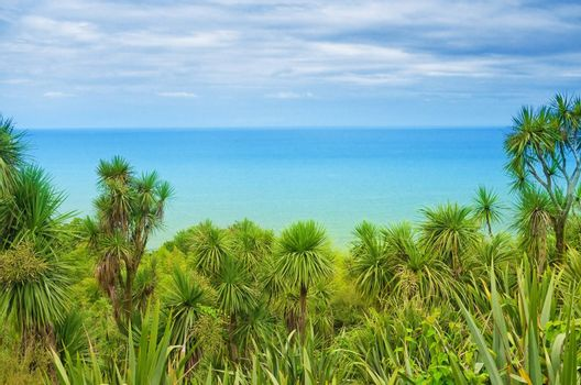palm trees on a background of the sea