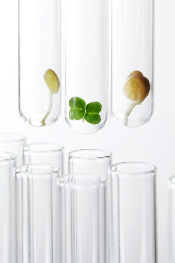 Plant sprouts in test tubes