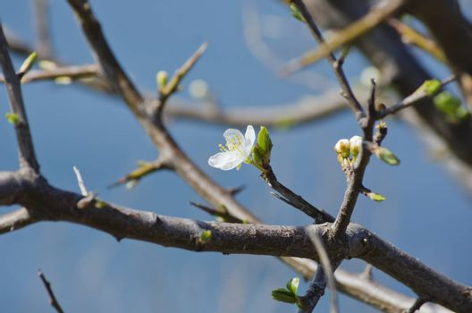 Photo of The Spring Tree Blossom