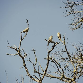 Birds at Tree