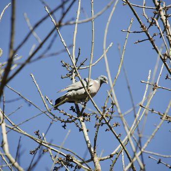 Photo of Single Turtledove at Tree