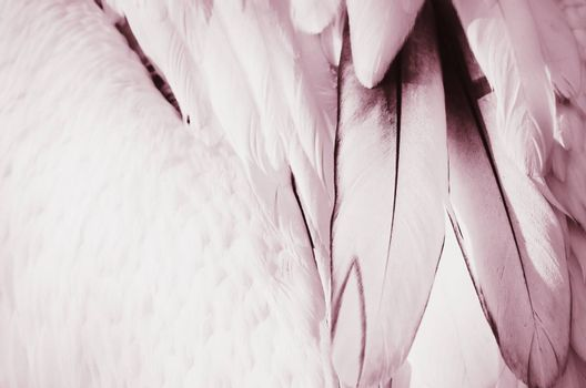 Photo of the Bird Pink Feather Background