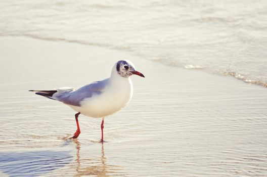Single Seagull in Sea Water Summertime