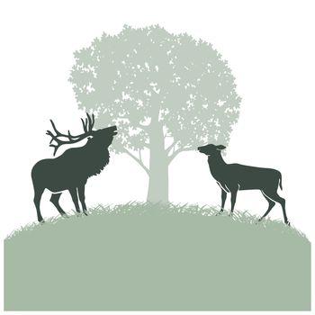 Deer in the rut
