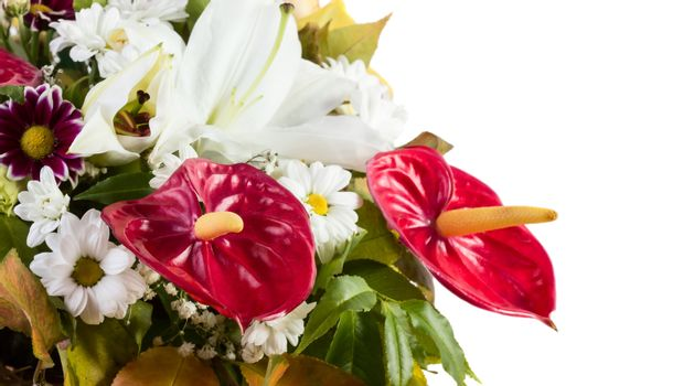 Anthurium flowre bouquet isolated on white background