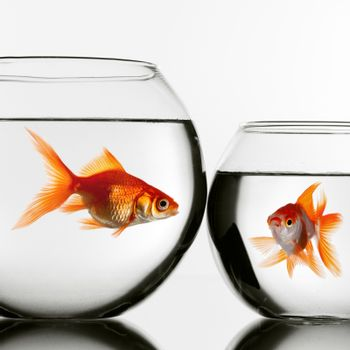 Two gold fish in aquariums