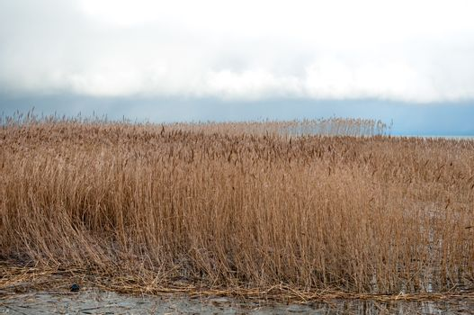 Landscape of lake and reeds. Nature of the fall season.