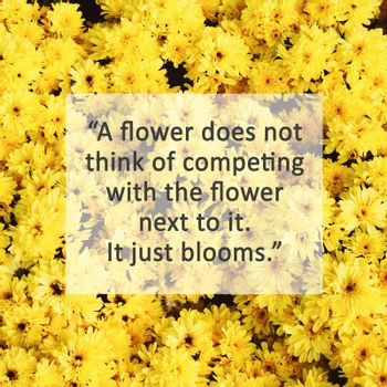Inspirational quote on yellow blossom flowers with retro filter effect