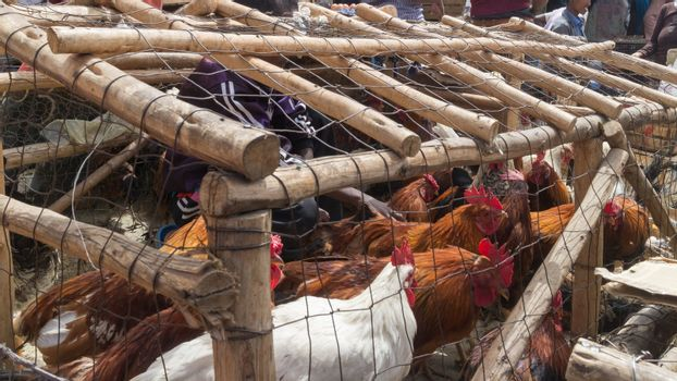 Addis Ababa: April 11: Roosters packed in small cages for sale  at a local market during Easter eve on April 11, 2015 in Addis Ababa, Ethiopia
