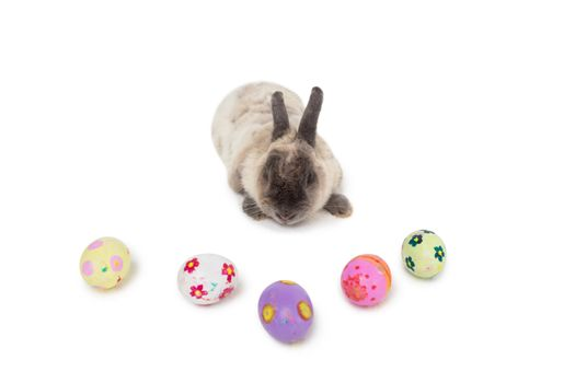 Fluffy bunny with Easter eggs