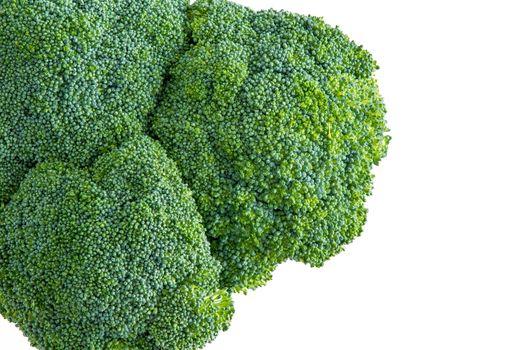 isolated head of farm fresh broccoli