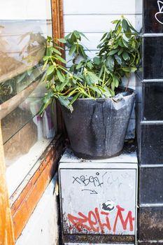 Neglected Pot Plan In Old Town Stavanger