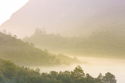 Beautiful sunrise in a misty rainforest, Thailand.