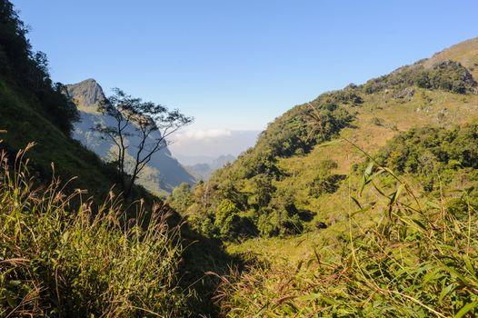 Beautiful hiking trails in rainforest, northern Thailand.