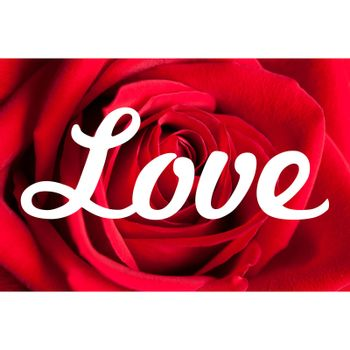Love typography background with rose petals and white borders.