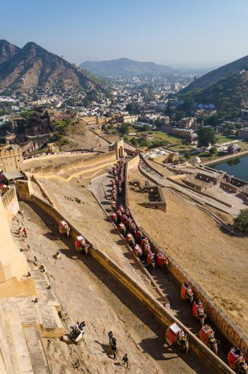Elephants climbing the path to Amber Fort in Jaipur