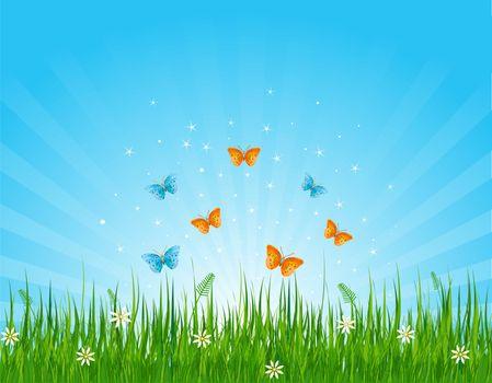 Grassy field and butterflies