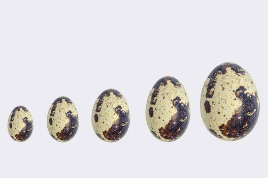 Different sized quail eggs in a row.