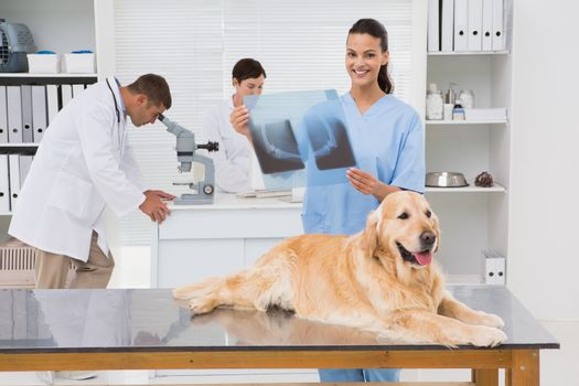 Veterinarian coworker examining dogs x-ray in medical office
