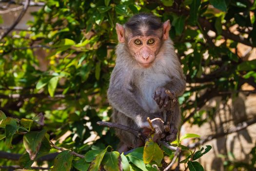 Monkey sitting on branch in jungle