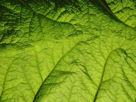 Close up photo of a leaf