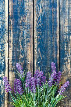 Lavender