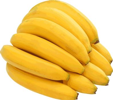 Bunch of bananas isolated on white background. Vector illustration.