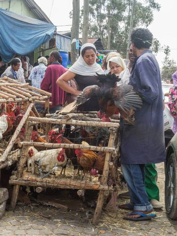 Addis Ababa: April 11: People bargain to buy roosters for the Easter Holidays at a local market on April 11, 2015 in Addis Ababa, Ethiopia