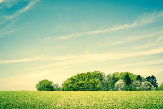 Countryside scenery with green fields and trees