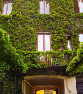 View of Italian house covered by ivy