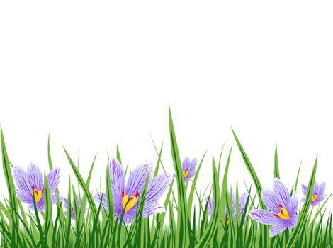 Illustration of Spring Purple Crocus Border, Copyspace