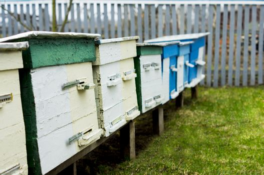 apiary. For your commercial and editorial use.