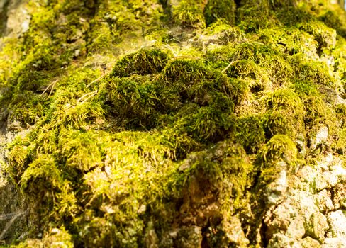 moss. For your commercial and editorial use