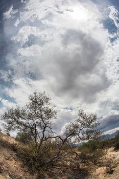 Dry Shrub in Arizona Desert