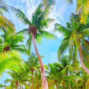Fresh green palm trees background